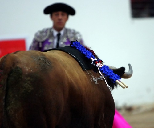 Bullfighting1861s