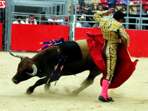Bullfighting1875s
